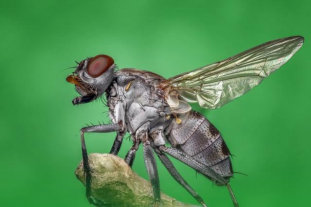 Spôsoby, ako udržať muchy preč z domu
