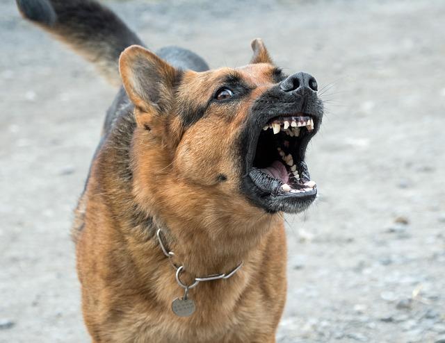 zlý pes